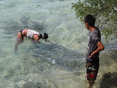 piantagioni di corallo